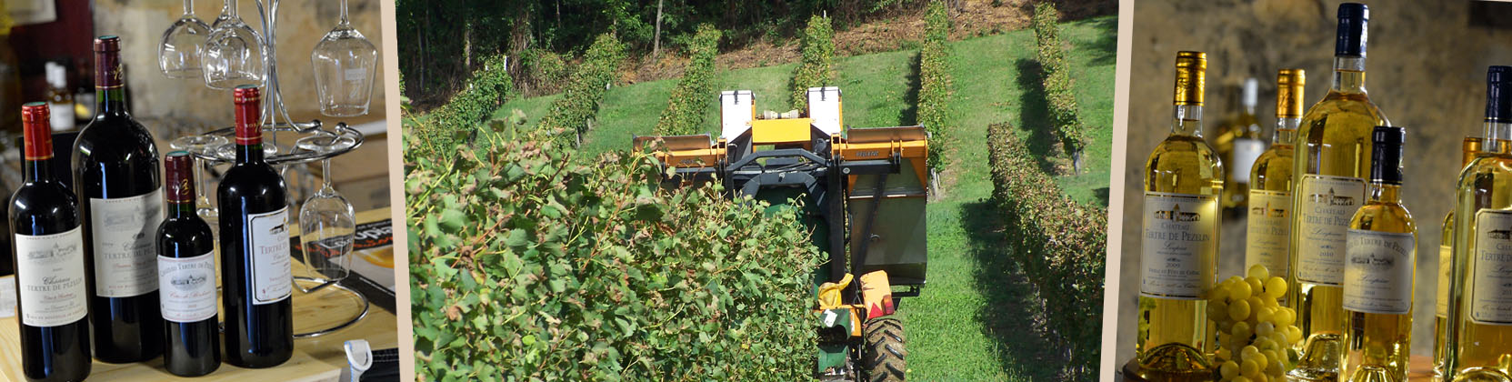 Recolte du vin au Chateau Tertre de pezelin